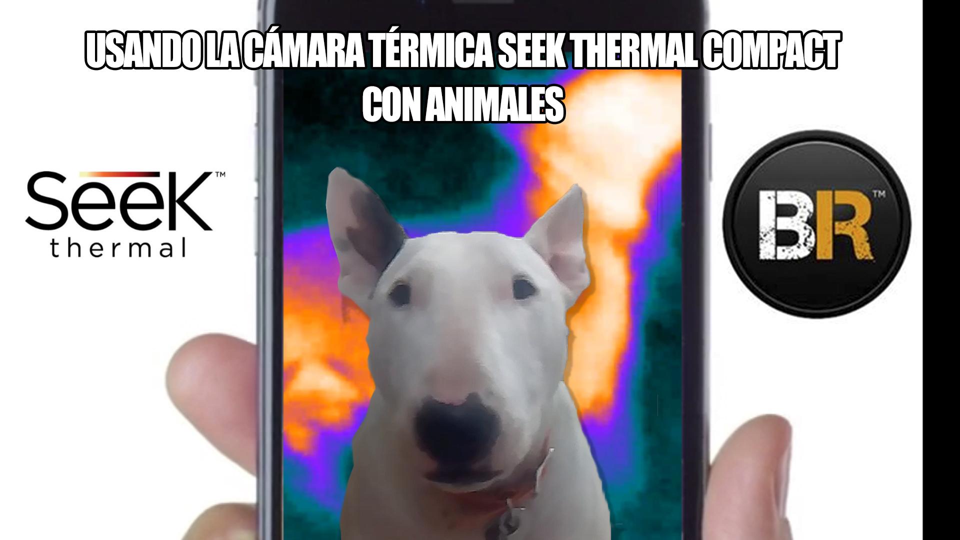Imagen de la cámara térmica Seek Thermal Compact usada con mascotas y animales